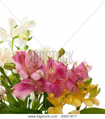 Bouquet of Alstroemeria flowers isolated on white background. Focus on the foreground