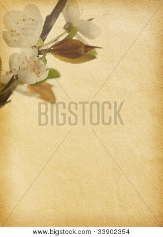 vintage  paper textures with Cherry Blossom