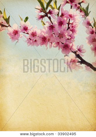 grunge paper with peach blossom