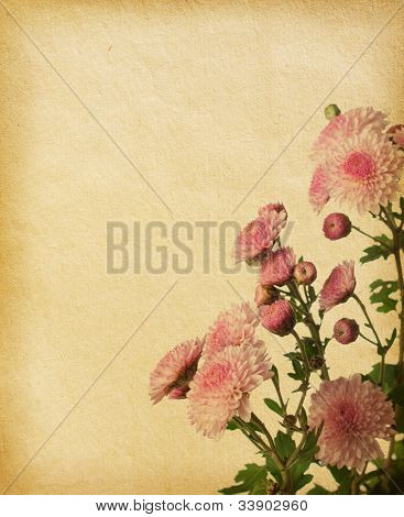 vintage paper textures with pink chrysanthemum