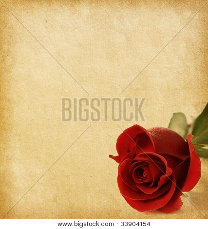 old paper texture with dark red rose