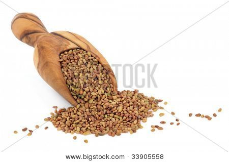 Alfalfa seed in an olive wood scoop over white background.