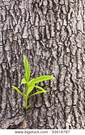 New tree life
