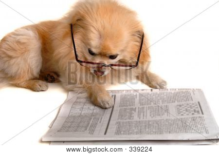 Dog Reads Newspaper