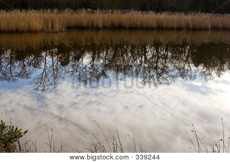 Pond Reflections 5477