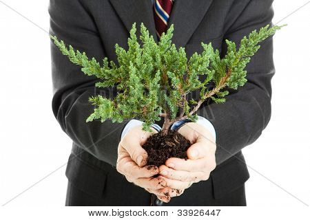 Businessman, unafraid to get his hands dirty, holding a bonsai tree.  Symbolizes the union of ecology and business.
