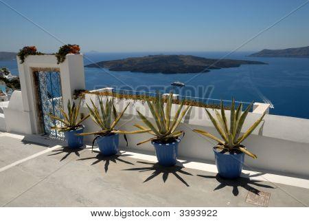 Cacti On The Street In, Santorini
