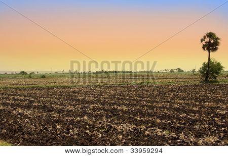 Barren fields in India under evening sunlight