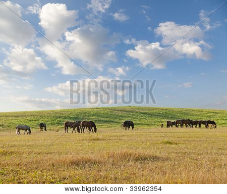 Group of horses eating grass on pasture in summer day