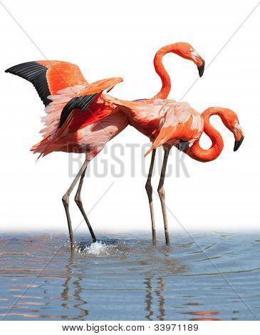 Loving Flamingo Couple
