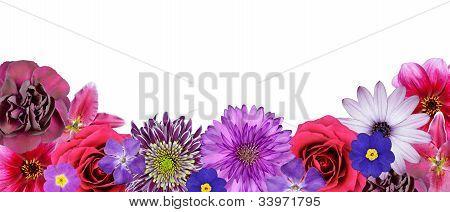 Varias flores de rosas, púrpuras, Rojas en la fila inferior aislado