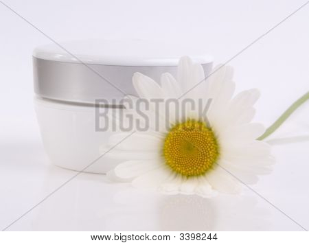 Cream And Camomile On White