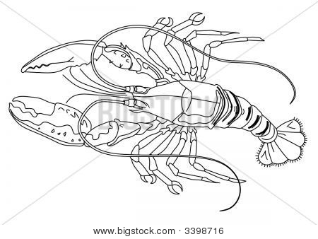 Lobster.Pdf