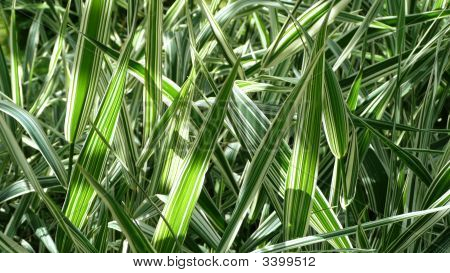 Grass Blades In Close Up