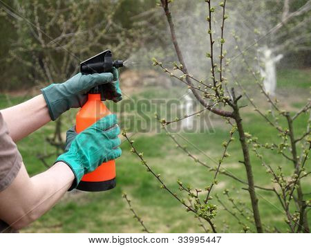 Spraying Plants With A Sprayer