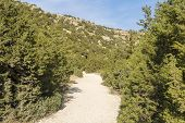 Shrubs And Foliage Grow Along A Mountain Road On The Island Of Cyprus. poster