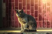 Gray Cat In The Winter Sun, A Close Portrait In A Residential Quarter Near The Entrance poster