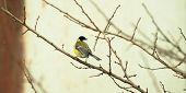 Titmouse Sits On A Winter Branch In Cold Weather, Photo In The Form Of A Banner poster