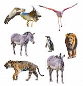 Set Of African Animals Isolated On White Background. It Is Collection Of Wildlife Photos, poster
