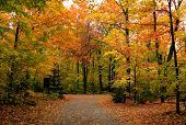 stock photo of fall trees  - Path in maple forest near George Lake - JPG