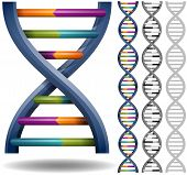stock photo of encoding  - Isolated DNA strands - JPG