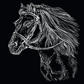 Horse Portrait With Bridle. Horse Head With Long Mane In Profile In White Color Isolated On Black Ba poster