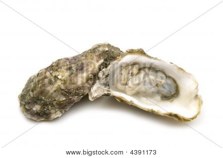 Opened Oysters
