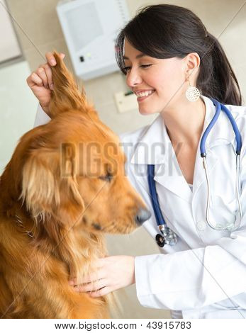 Veterinarian examining the ear of a cute dog