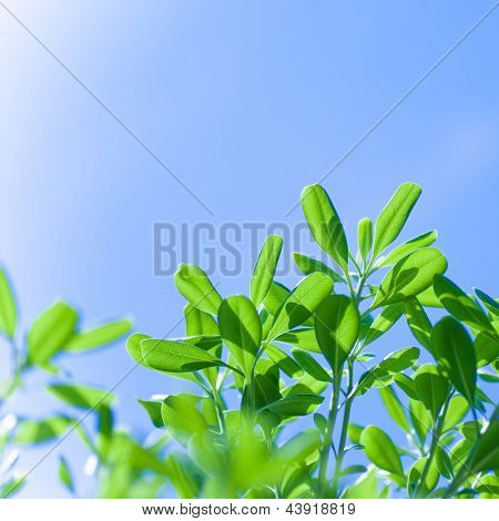 Fresh green tree foliage over clear blue sky background, sunny day, natural border, spring season, warm weather
