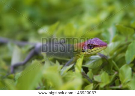 green gecko on natural background