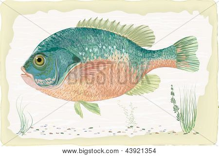 Sunfish on retro style background