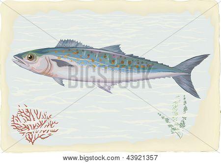 Mackerel on retro style background