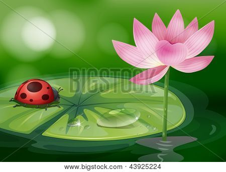 Illustration of a waterlily with a red bug
