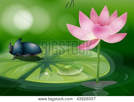 Illustration of a bug above the waterlily