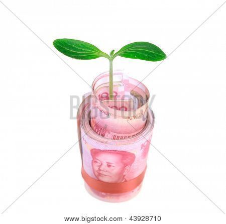 Green plant leaf growing on money, money of china
