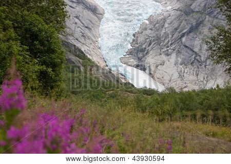 Jostedal glacier with pink flowers  in  Norway, Scandinavia, Europe