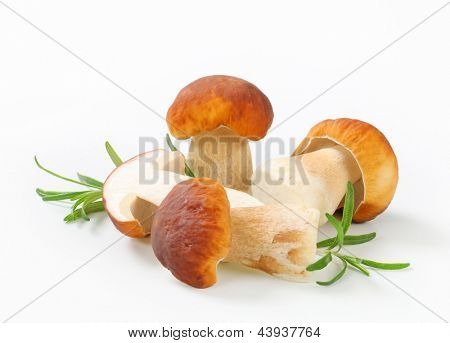 fleshy boletus with rosemary