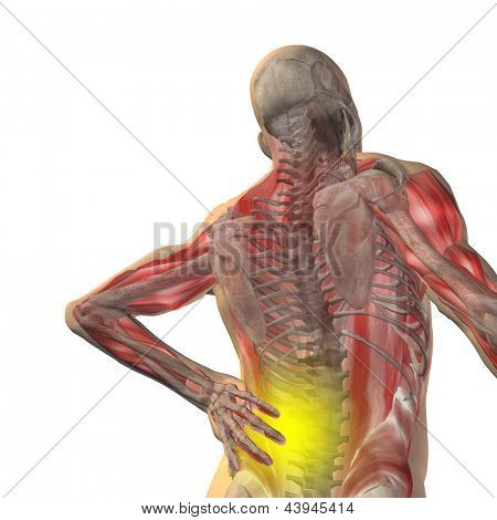 High resolution concept or conceptual 3d human male or man anatomy with back pain isolated on white background