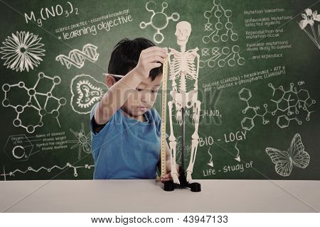 Asian Kid Measuring Human Skeleton Model