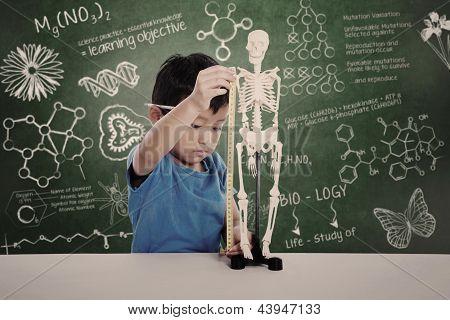 Asian Kid Measuring Human Skeleton Model