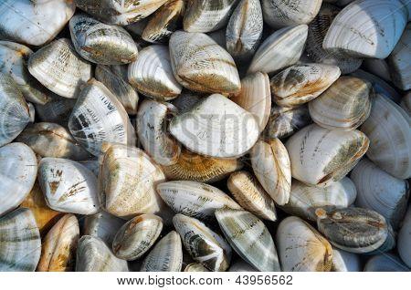 Sea shells at a sea food market