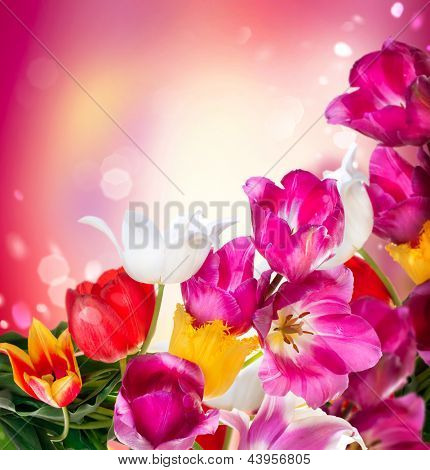Spring Tulip Flowers over white. Tulips bunch. Floral Border Design