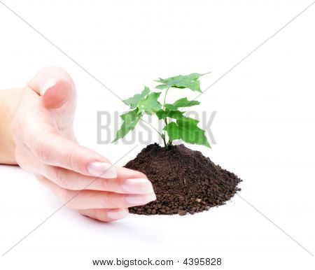 Hand Of Woman And Green Sprout