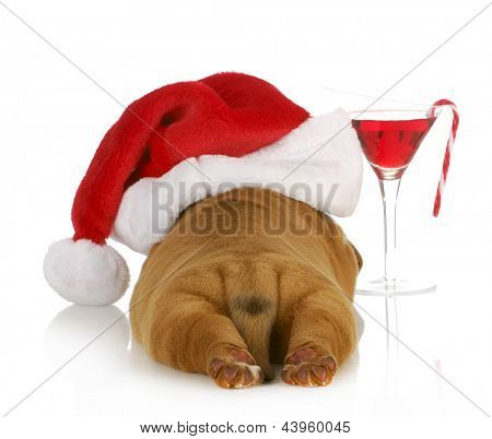 christmas puppy - dogue de bordeaux puppy wearing santa hat laying beside christmas cocktail isolated on white background