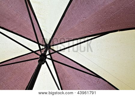 Wet Umbrella