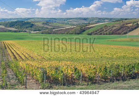 Vineyard near Chablis,Burgundy,France