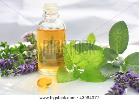Fresh Herbs And Oil