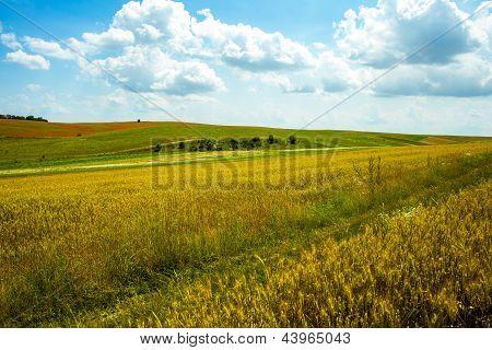 Summer Landscape.