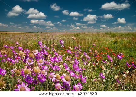 summer landscape with pink wild flowers
