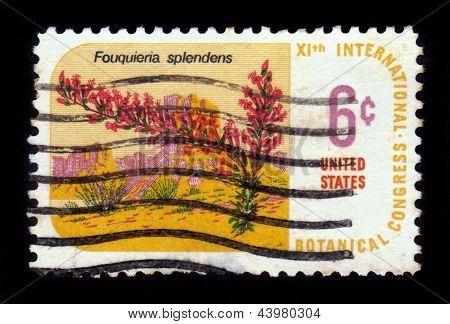 Deserto planta Ocotillo - Fouquieria Splendens